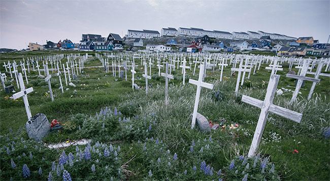 Những cây thánh giá và hoa dại mùa hè lấp đầy một nghĩa trang ở Nuuk.