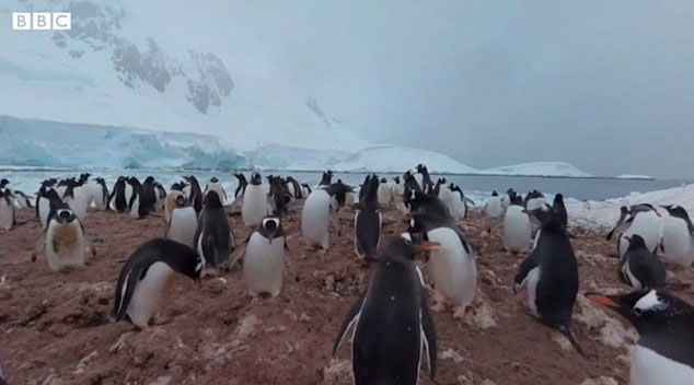 Cảm giác như đứng giữa bầy chim cánh cụt.