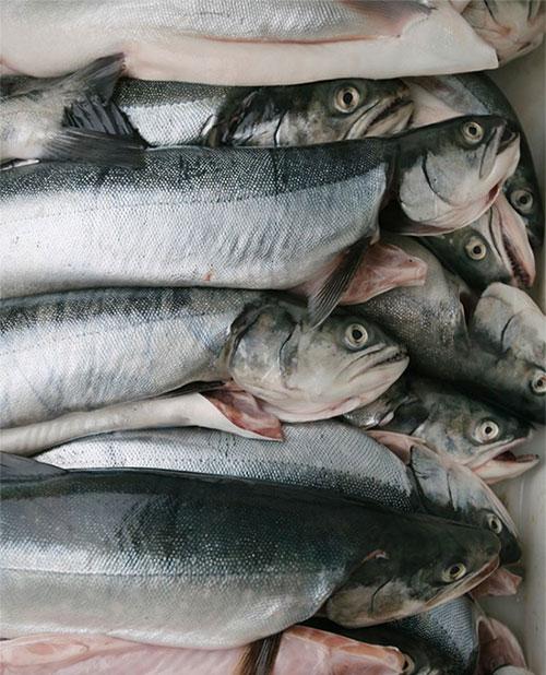 Ngành công nghiệp đánh bắt cá chiếm phần lớn nền kinh tế Greenland.