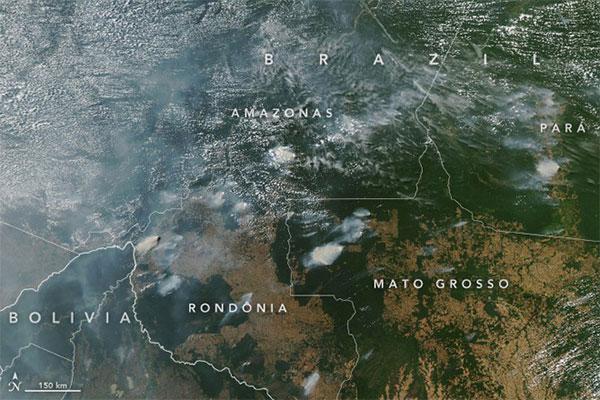 Rừng Amazon đang cháy: xót xa nhìn những con thú chết trong thảm họa