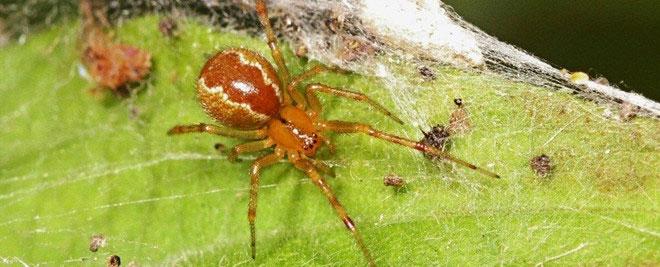 Loài nhện có xu hướng hung dữ hơn để thích nghi với biến đổi khí hậu.