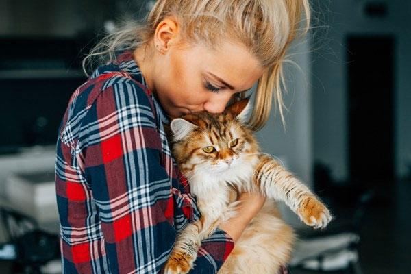 Loại vaccine này không gây ra tác dụng phụ nguy hiểm hoặc lâu dài cho mèo.