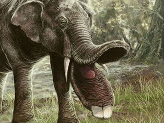 Người ta cho rằng loài này sống ở khu vực đầm lầy của các thảo nguyên cỏ
