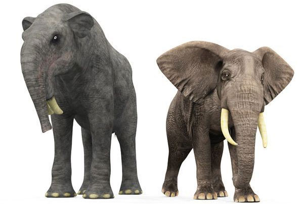 Hình ảnh so sánh kích thước của loài Deinotherium so với voi Châu Phi ngày nay.