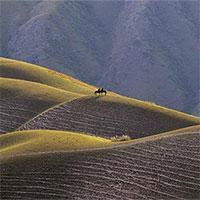 Mê mẩn với đồng cỏ đẹp như tranh tại Tân Cương