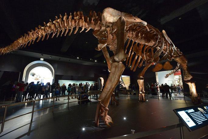 Con người nhỏ bé bên Sauropods khổng lồ