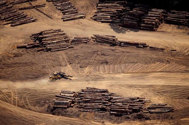 Nạn phá rừng tràn lan chính là nguyên nhân chủ yếu gây hỏa hoạn ngoài tầm kiểm soát...
