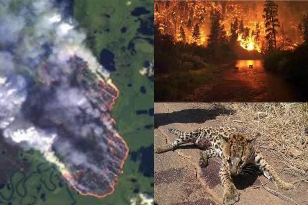 Những hình ảnh đang được chia sẻ mạnh trên MXH, kêu gọi cứu lấy rừng Amazon trước khi quá muộn.