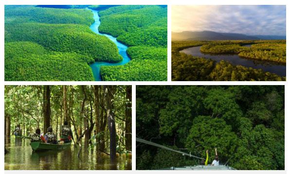 Hậu quả là cánh rừng với những mảng xanh ngút ngàn đang lâm vào tình thế hiểm nghèo nhất