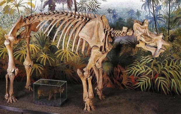 Xương hóa thạch của loài Uintatherium.