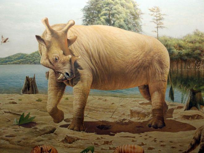 Uintatherium đực sở hữu 6 chiếc sừng trên trán