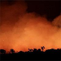 Cháy rừng Amazon ảnh hưởng sức khỏe con người như thế nào?