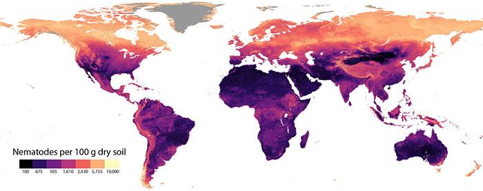 Mật độ tuyến trùng trên 100 gram đất phân bố ở khắp thế giới.