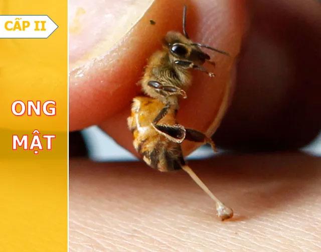 Ong mật