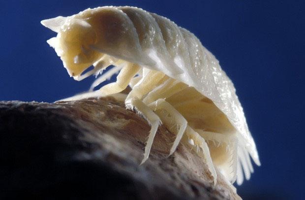 Hầu như toàn bộ các sinh vật kể trên đều không có mắt
