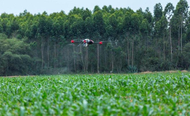 Một chiếc máy bay không người lái đang làm nhiệm vụ trừ hại cho nhà nông.