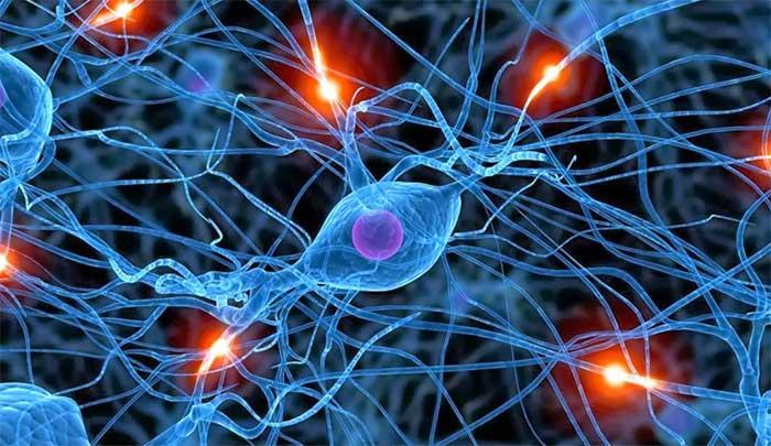 Các khoảng trống trong não bộ có thể đóng vai trò rất quan trọng mà chúng ta chưa hiểu hết.