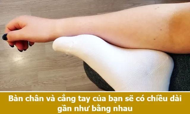 Bàn chân và cẳng tay