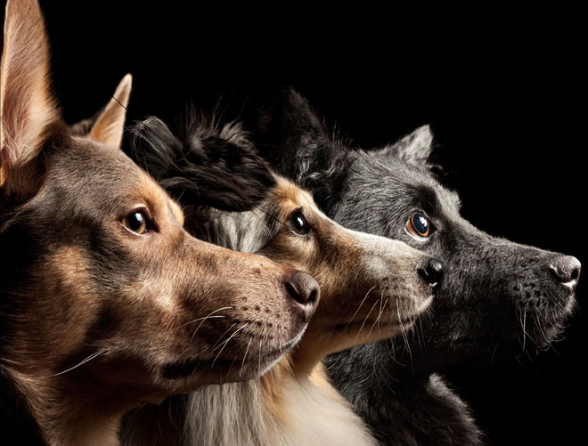 Chó săn