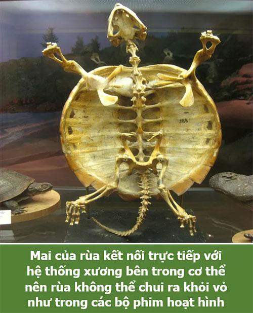 Mai rùa