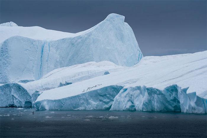 Bầy hải âu đậu trên băng trôi trong một ngày mưa
