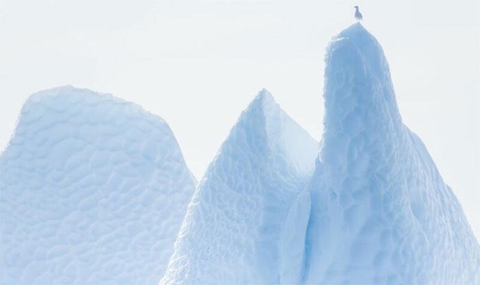 Một con mòng biển đậu trên đỉnh một tảng băng trôi