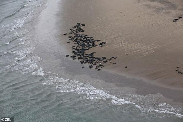 Vết đen trong hình là hải cẩu - cụ thể là hải cẩu cảng.