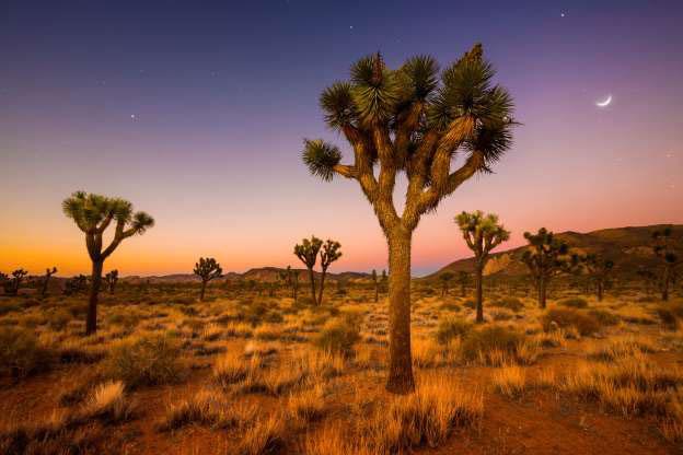 Sa mạc Mojave