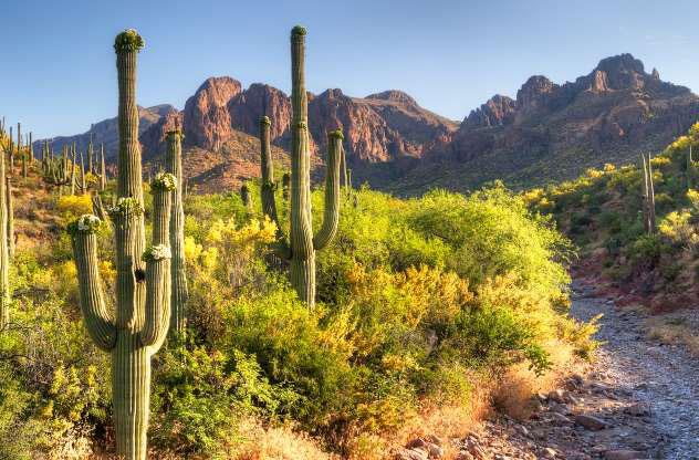 Sa mạc Sonoran
