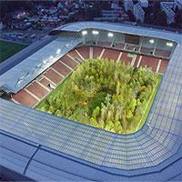 Rừng cây trong sân bóng đá