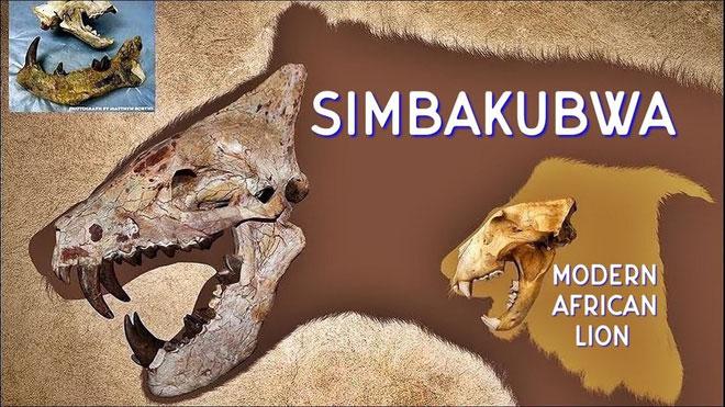 Bộ hàm của chúng to lớn hơn nhiều so với sư tử đực trưởng thành hiện đại.
