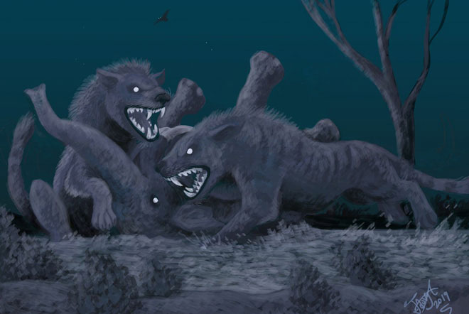 Răng nanh và răng hàm lớn giúp cho chúng có thể dễ dàng xé thịt và nghiền vỡ xương của các loài thú to lớn khác.