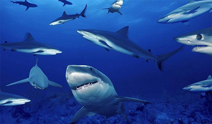 Cá mập đã sinh sống trên Trái Đất hàng trăm triệu năm