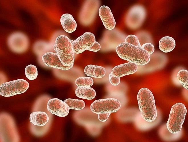 Lượng vi khuẩn đường ruột của con người thực sự có thể ảnh hưởng đến cách xử lý cảm xúc của mỗi người.