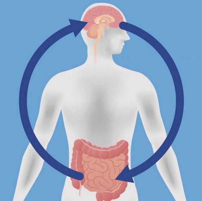 Vi khuẩn đường ruột tốt khiến ta có cảm giác thoải mái hơn.