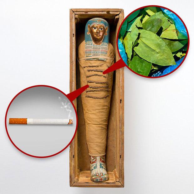 Cocaine và thuốc lá trong xác ướp Ai Cập
