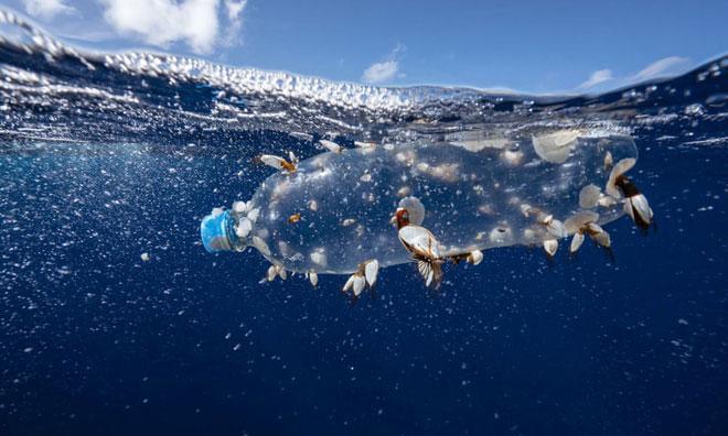 Từ thập niên 40 cho tới nay, lượng vi nhựa trong các lớp trầm tích đã nhân đôi mỗi 15 năm.