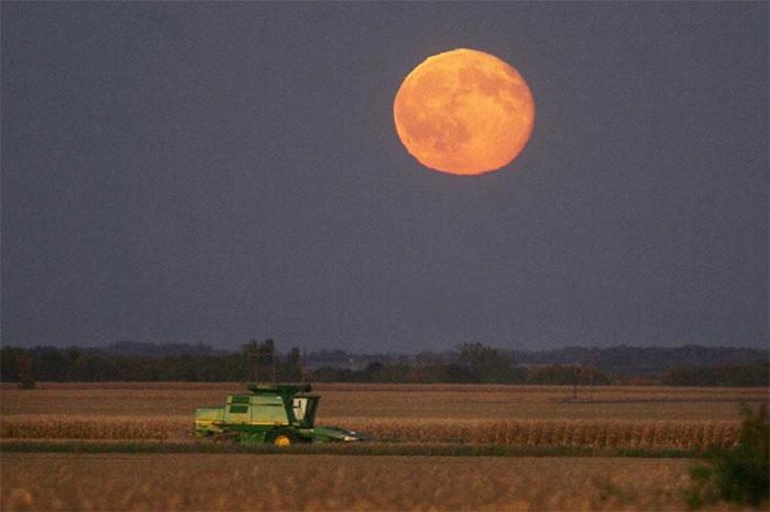 Nông dân thu hoạch bắp dưới ánh trăng gần TP Mason, bang Iowa - Mỹ vào ngày 15/10/2008.