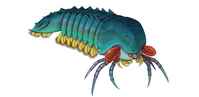 Hình ảnh mô tả loài sinh vật có tên Mollisonia plenovenatrix.