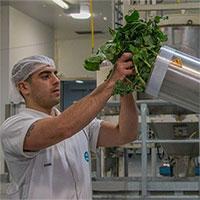 """Australia biến """"rác"""" súp lơ và bông cải xanh thành thảo dược"""