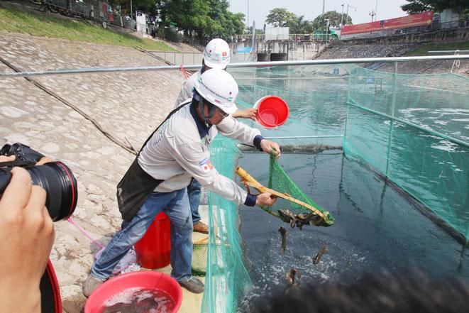 Chuyên gia Nhật Bản cho biết, cá Koi và cá chép điều kiện sống phải ở môi trường nước sạch