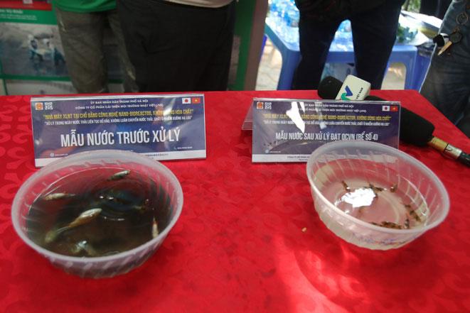 Cá trong mẫu nước chưa được xử lý (bên trái) chết nổi trong khi cá trong mẫu nước qua xử lý sống khỏe mạnh.