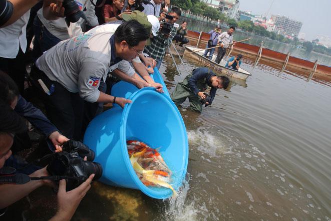 Thả 300 cá Koi, cá chép Việt Nam xuống vùng nước đã được xử lý