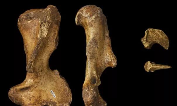 Một vài mẫu hóa thạch của palorchestid.
