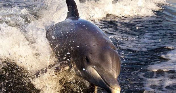 Môi trường sống của cá heo châu Âu có nồng độ kỷ lục các hóa chất độc hại.