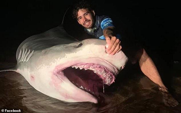 Nhiều người lo ngại cho số phận của con cá mập hổ dù các ngư dân tuyên bố mọi loại cá bị bắt đều được thả sau đó.