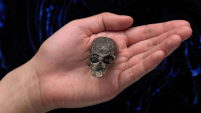Một hộp sọ hóa thạch đặc biệt của Chilecebus carrascoenis