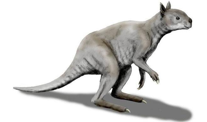 Hình dáng của loài chuột túi cổ đại tại Úc cách đây 40.000 năm.