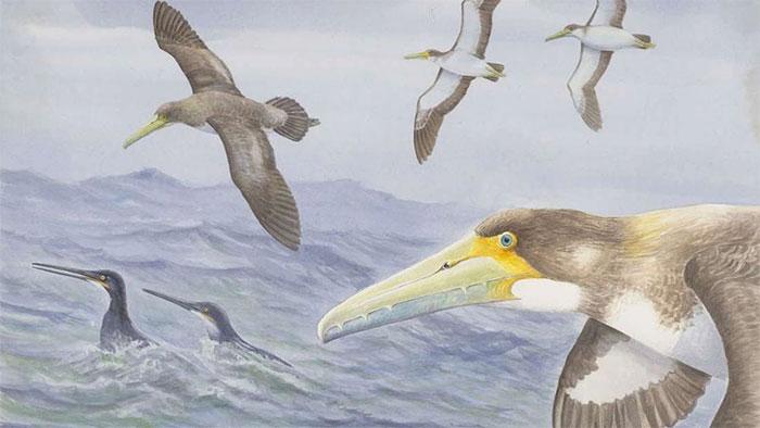 Hình ảnh phác hoạ loài chim cổ nhất thế giới.