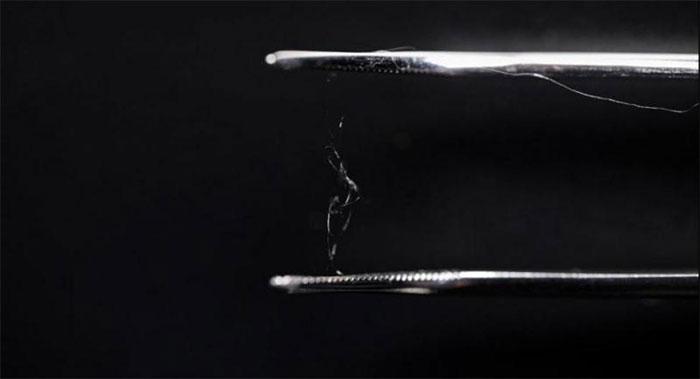Các nhà khoa học đã kết hợp protein tơ tằm với sợi cellulose gỗ để tạo ra một vật liệu composite mới.